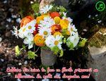 Caldura din inima ta face ca florile primaverii