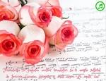 Frumusetea si gingasia acestor trandafiri